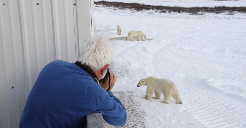 Photographing bears at the Tundra Lodge Polar Bear Adventure