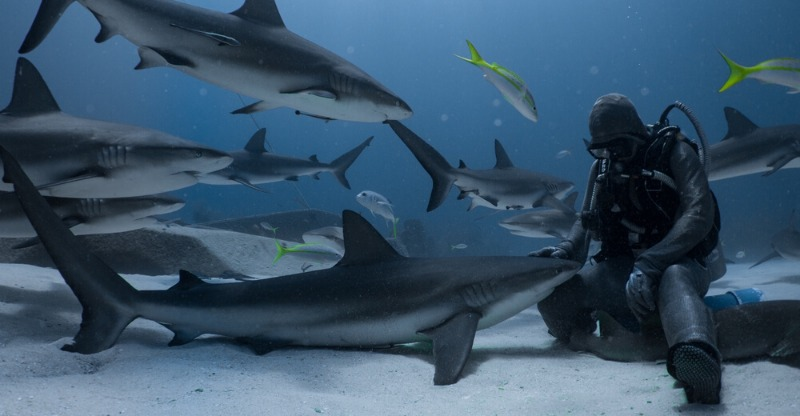 Shark Handling Experience feeding sharks on the sea bed