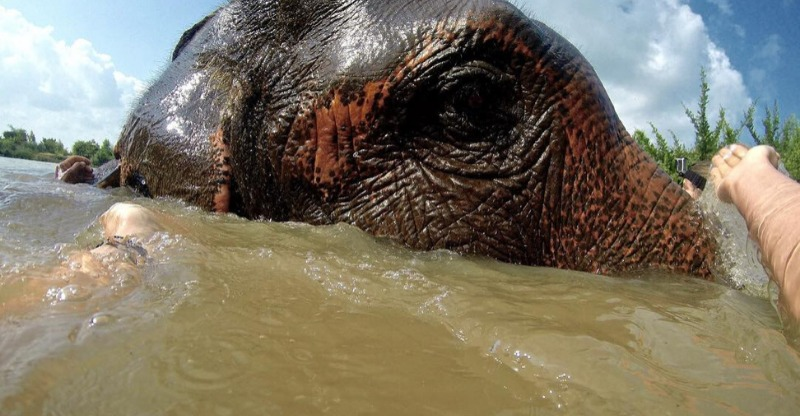 Bathing elephants in the water