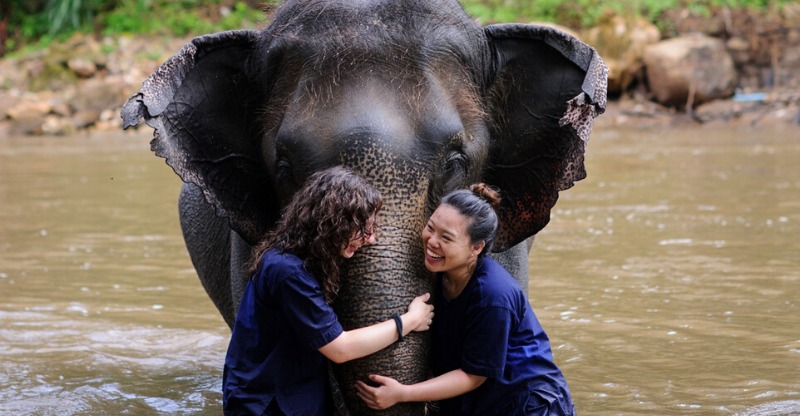 Volunteer with Elephants, bathing in the river