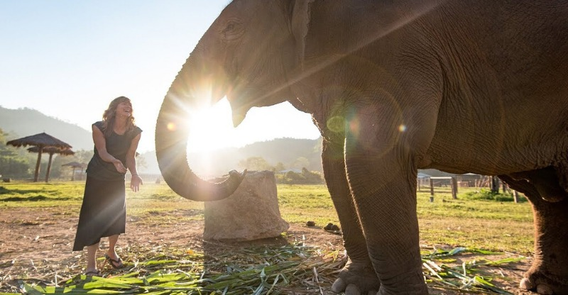 Majestic elephant with the sun shining through