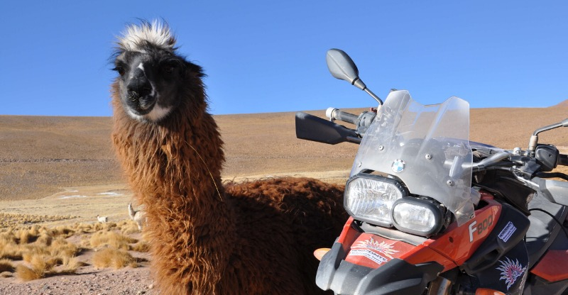 Bike and an Alpaca on the side of the road Motorbike Rally Argentina