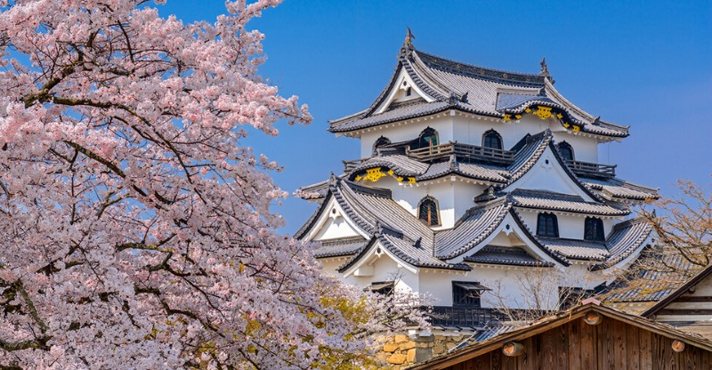 Japanese temple surrounded by cherry blossoms