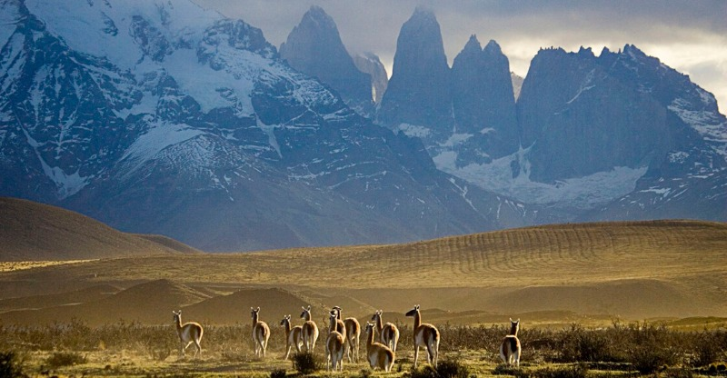 The majestic Chilean mountains overlooking a herd of alpacas