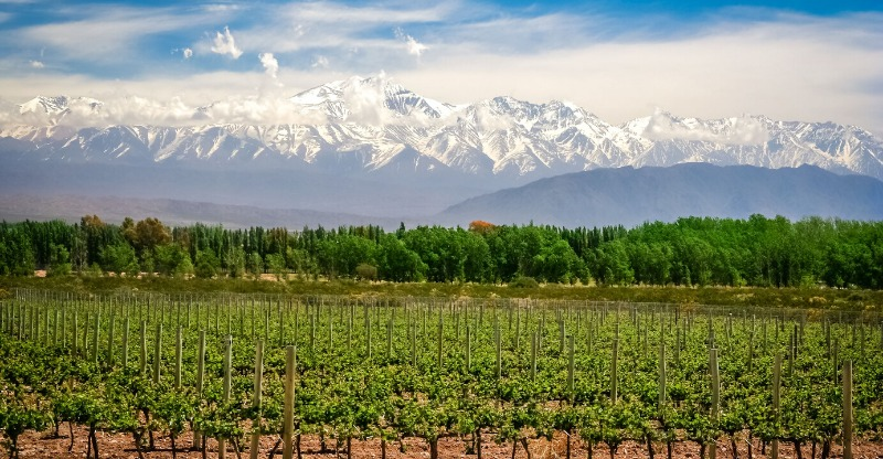 Scenic mountain backdrop in the vineyards of Argentina