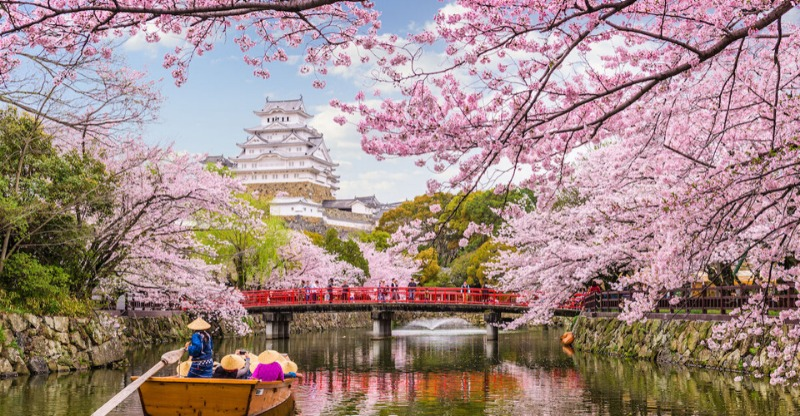 Cherry Blossom Festival Japan by boat