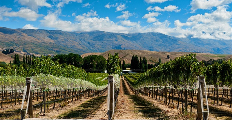 Argentinas wine vineyards in the foothills of the mountains