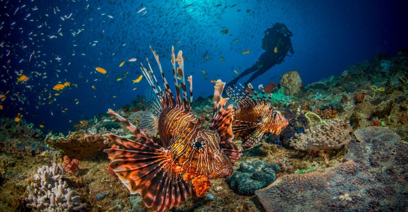 Exotic fish and colour diving off the Mozambique shoreline