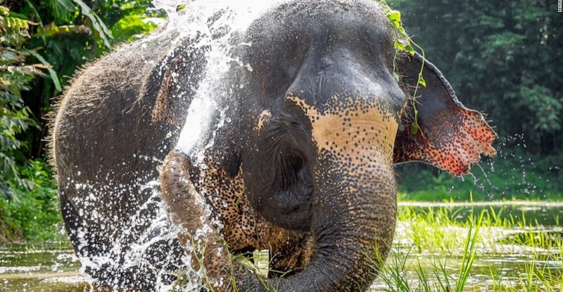 Elephant bathing in the water