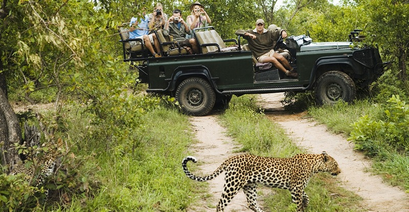 Namibia Culture and Wildlife Adventure spotting a Cheetah