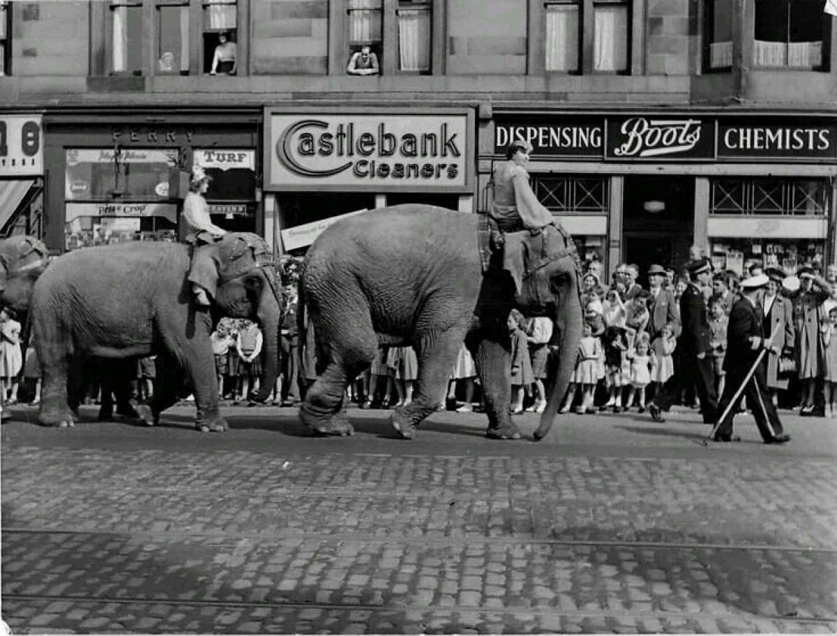 Glasgow's trunk road... (Elephants on Victoria Road, 1953 (Picture: James Stewart Baxter))
