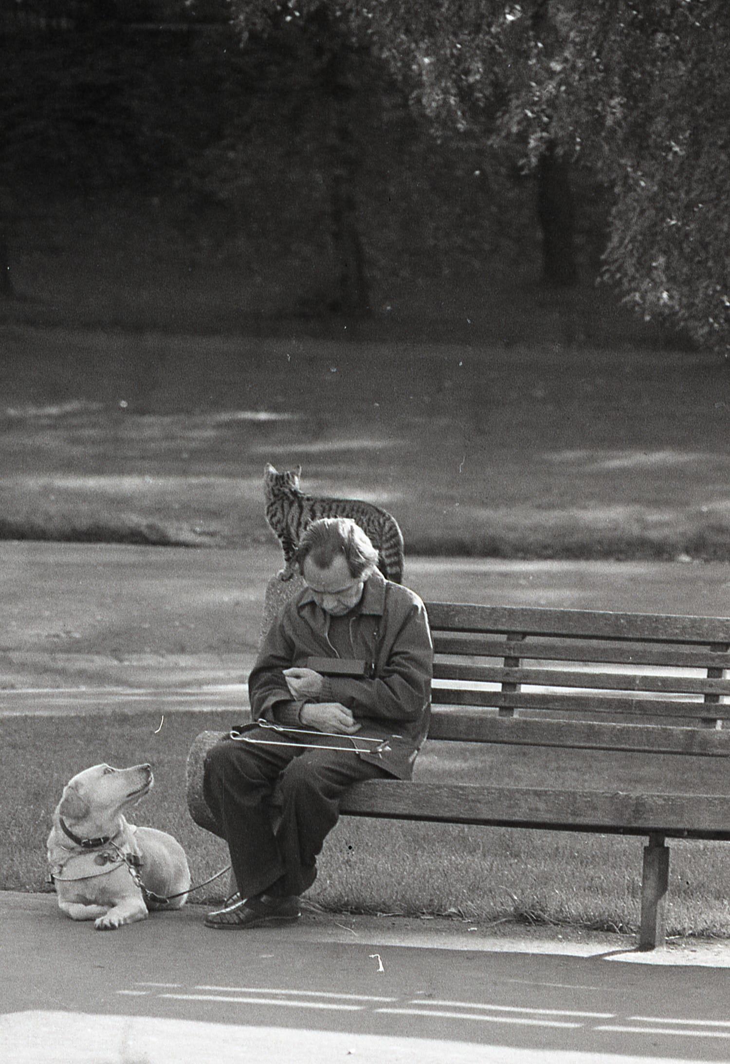 One man and his dog, and his cat