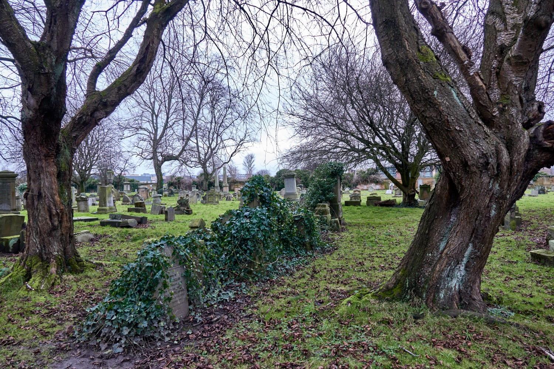 Vine-choked headstones. Pictures: Bill Mackintosh