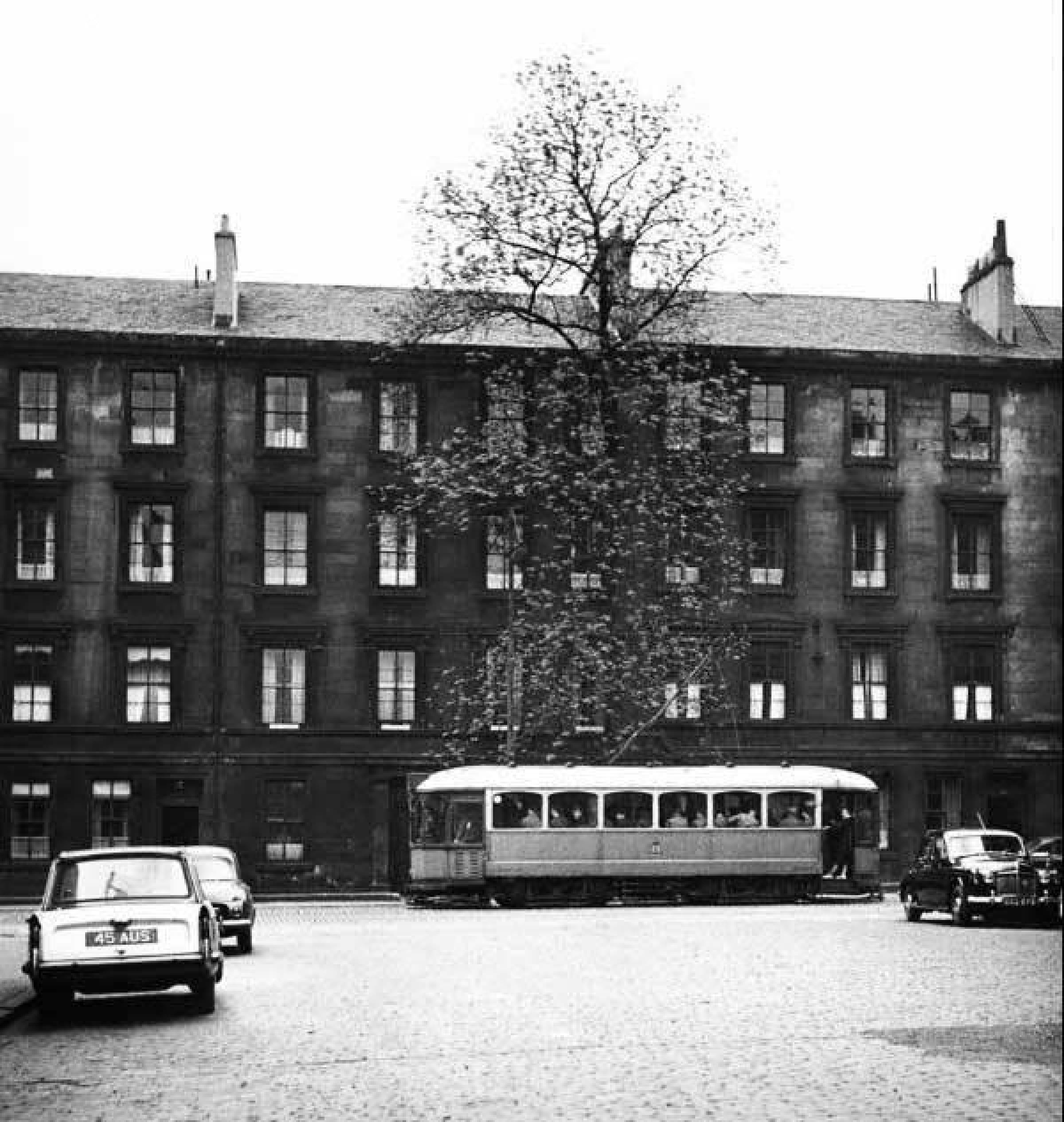 Argyle Street tree (The Argyle Street ash tree, 1960s)
