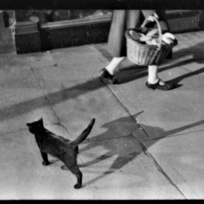 Shadows in the city (Cat on Sauchiehall Street, 1951)
