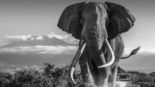 david yarrow photographer