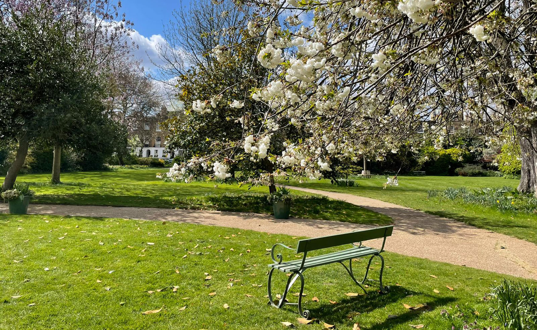 A dark green bench facing towards a patch of grass and a white blossom tree