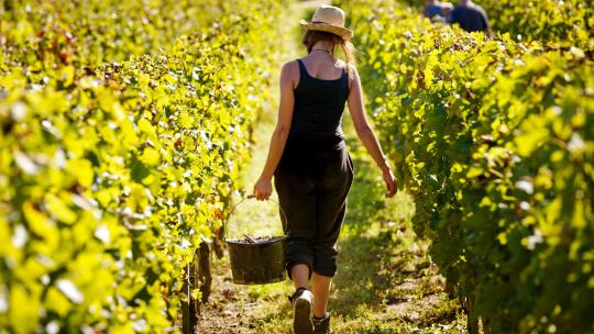 Meet the women shaking up the wine industry