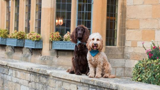 Two dogs sitting outside The Lygon Arms