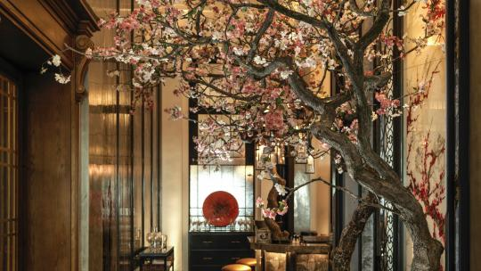 cherry blossom, london, restaurants, menus