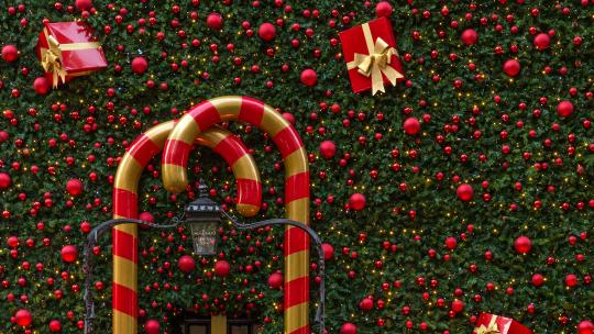 london's best christmas trees