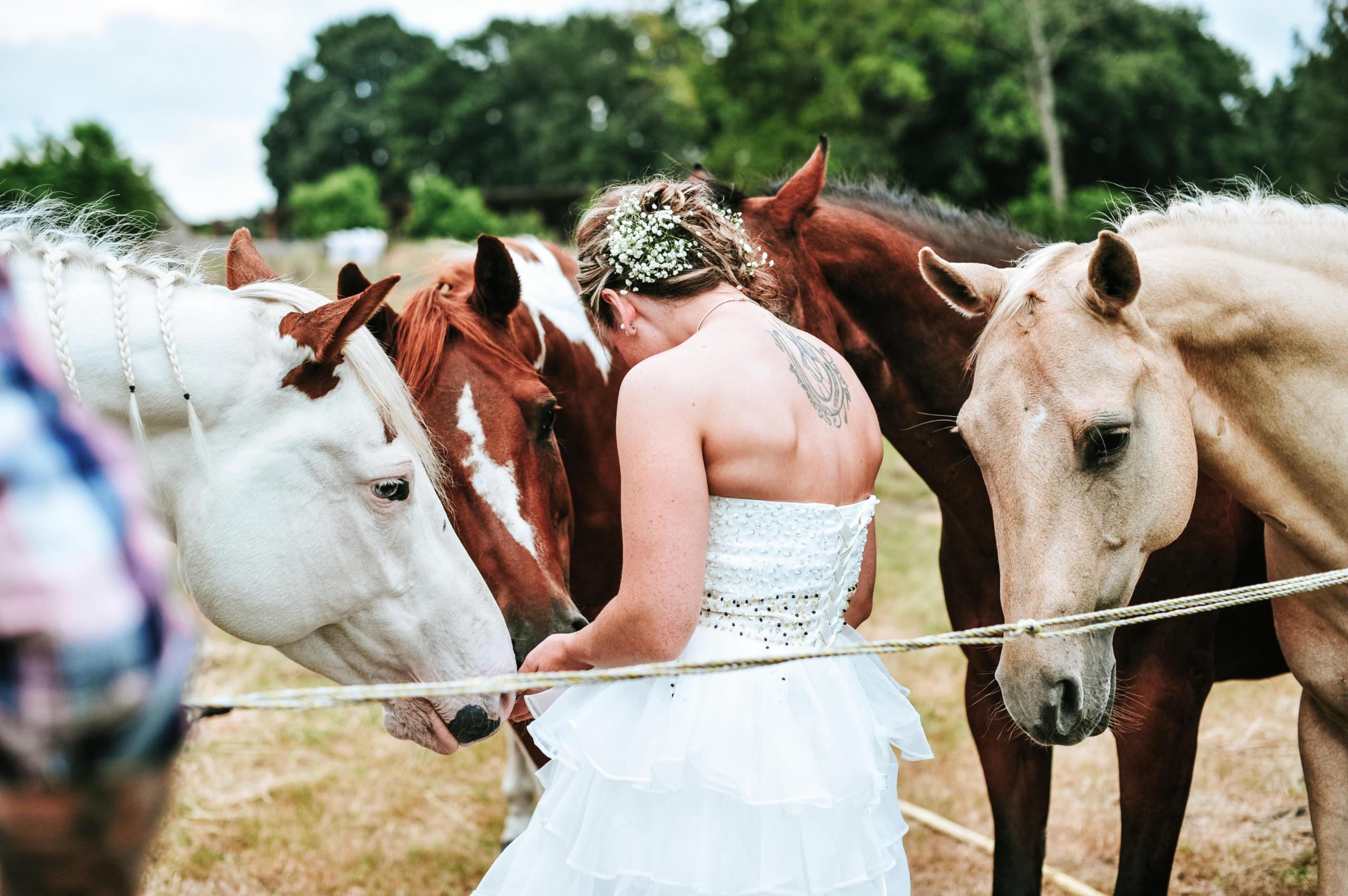 Dieren fotografie huwelijk