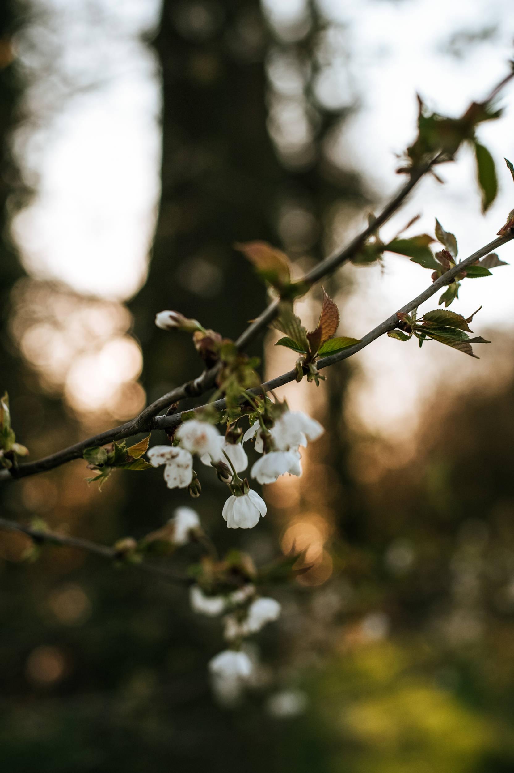 natuur fotografie