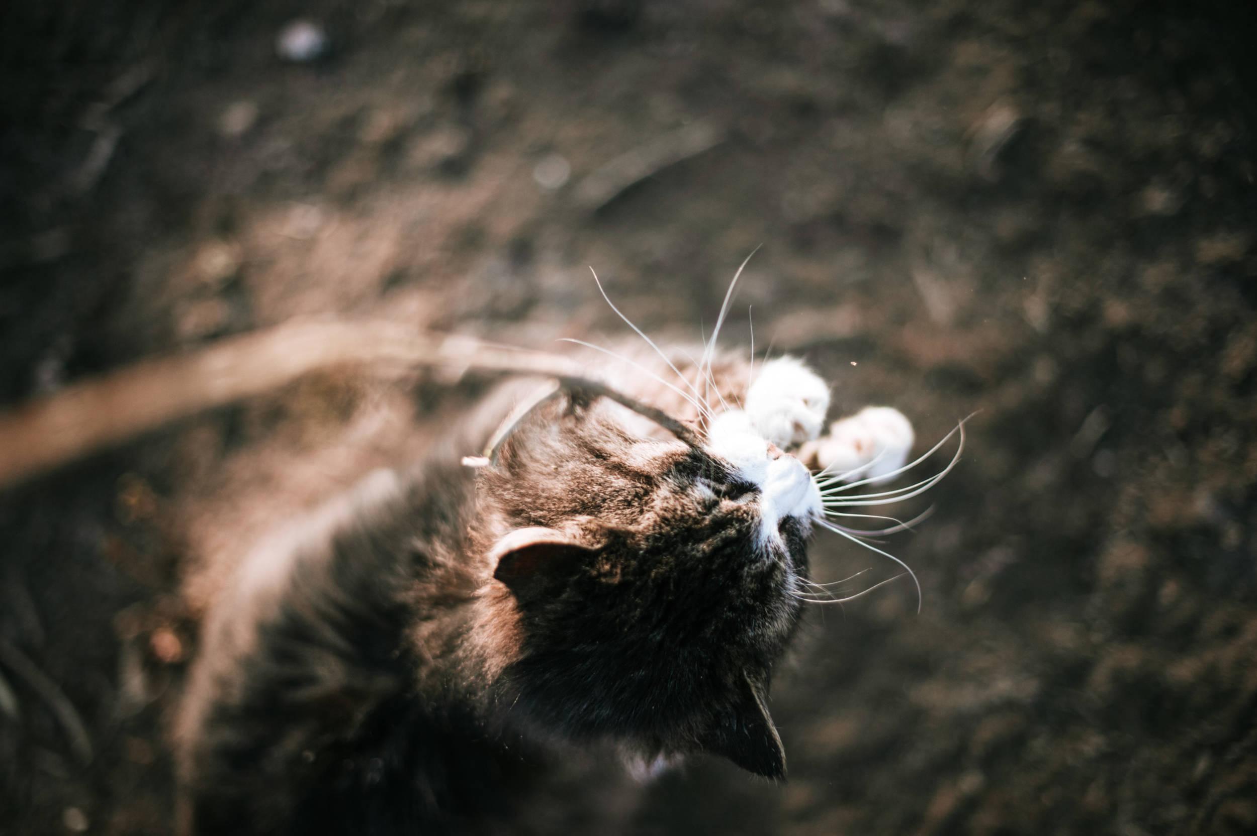 Dieren fotografie