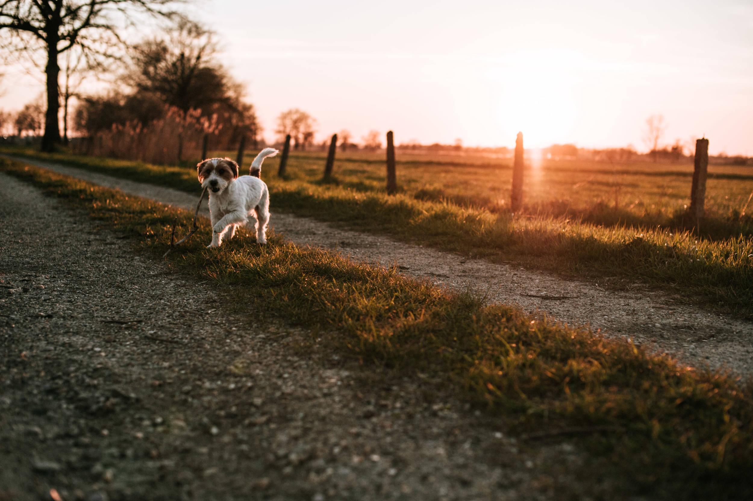 golden hour dieren fotografie