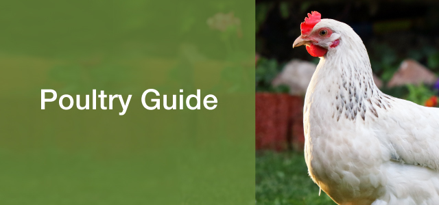 Poultry Guide