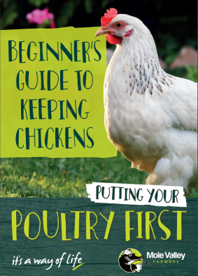 Beginners Poultry Guide