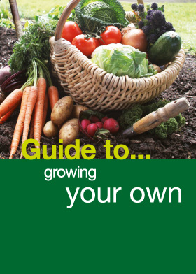 Grow your own seed guide