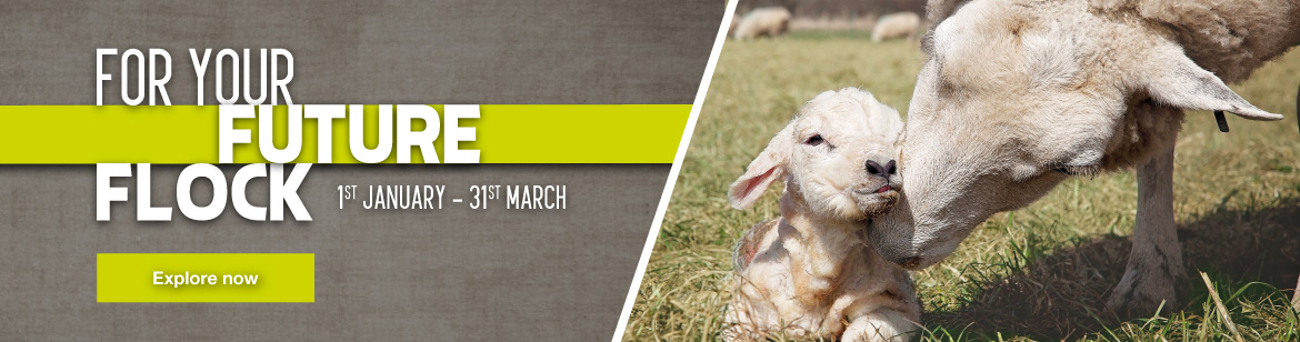 For your future flock - lambing essentials