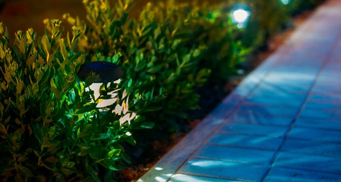 Brighten up your garden this winter