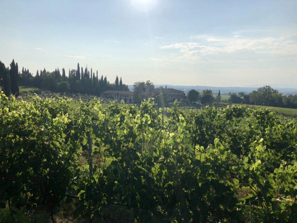 Lombardy Vineyards
