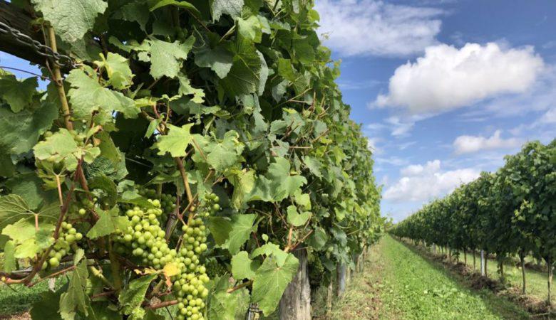 Wine estate - UK