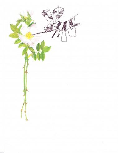 Yuri and Konstantin Shamanov Drawings – Set of 8 (4)