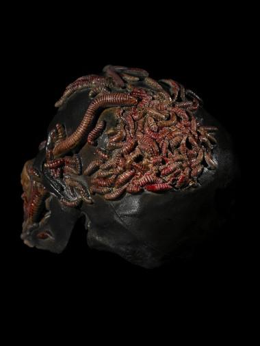 Maggots