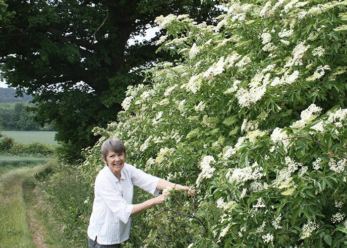 Jane foraging for elderflower