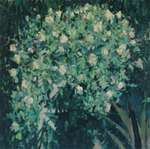 Green [roses]