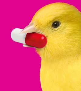 Good Canary (2016)