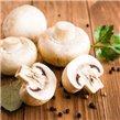 Mushrooms and mushrooms