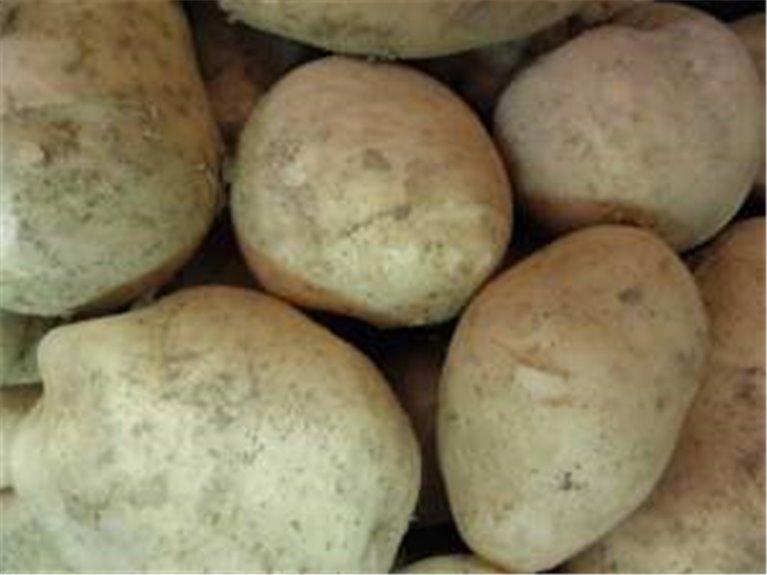 10 kg de patatas blancas kennebec, 10 kg