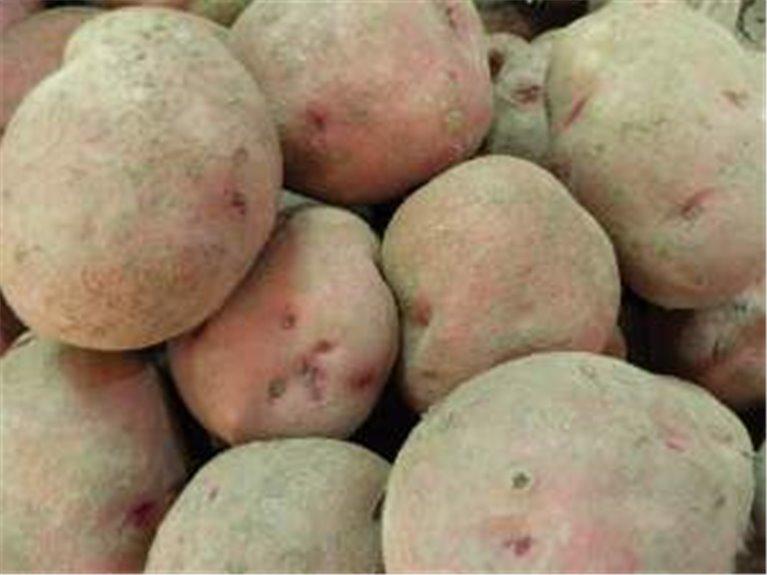 10 kg de patatas rojas red pontiac, 1 kg
