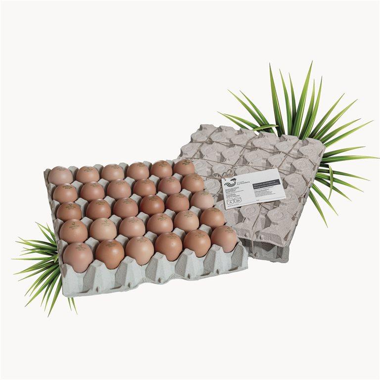 30 EcoSustainable Eggs