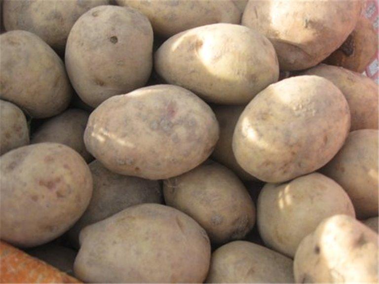 Patata del Bierzo. 5Kg, 1 ud
