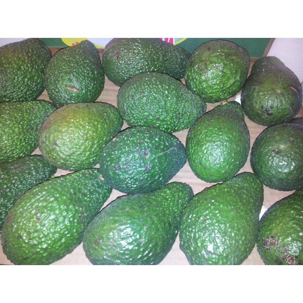 AGUACATE BABY