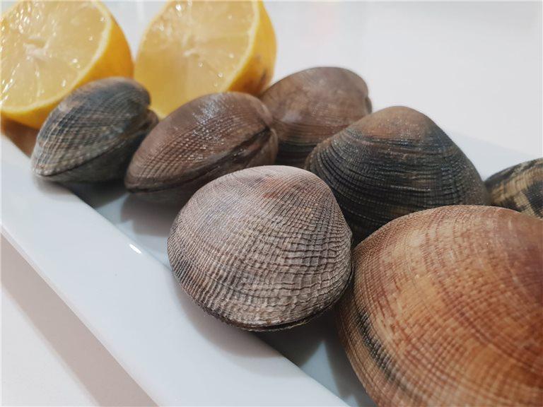 Almeja de Cultivo Fresca 1kg (ref. 030002)