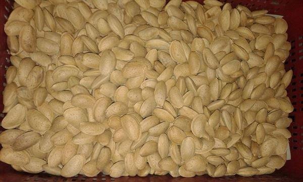Almendra con Cáscara 0,5 kilos