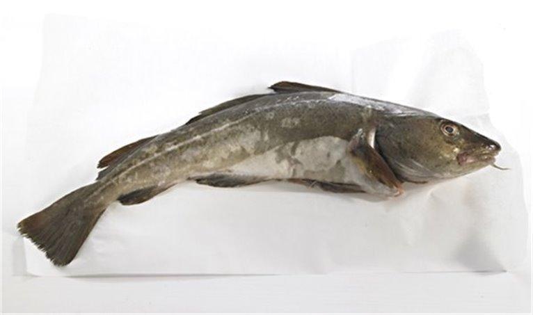 Bacalaito (€/Kilo), 1 kg